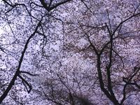 20080327-2.jpg