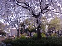 20080403-3.jpg